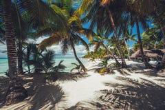 Palmtree et plage tropicale images stock