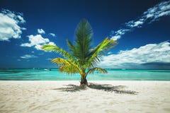 Palmtree et plage tropicale photos stock