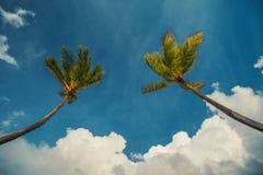 Palmtree et plage tropicale photos libres de droits