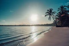 Palmtree et plage tropicale La république dominicaine image stock