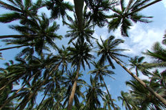 Palmtree forest Stock Image