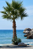 Palmtree in front of the blue sea. Palmtree in front of the sea royalty free stock photo