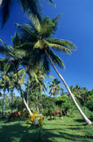 Palmtree Garten mit Pferden Stockfotos