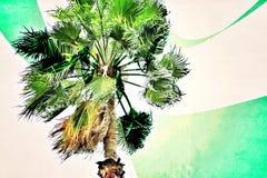 Palmtree grafisk rörelse i vinden Arkivfoton