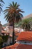 Palmtree i mitt av Dubrovnik Arkivfoto