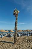 Palmtree i stranden av Marbella Royaltyfria Foton