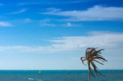 Palmtree landscape. Lonely palmtree against the ocean royalty free stock images