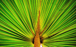 Palmtree leaf Stock Images