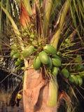 Palmtree Mexique Photographie stock