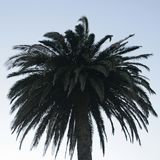 Palmtree mit hellem blauem Himmel hinten Lizenzfreie Stockfotos