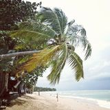 Palmtree na kolanta, Tajlandia Fotografia Royalty Free