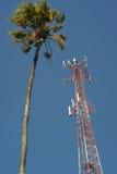 Palmtree och kommunikationsantenn Fotografering för Bildbyråer