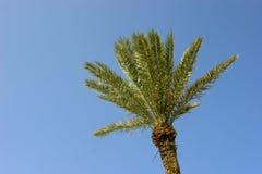 Palmtree op blauwe achtergrond Stock Foto's