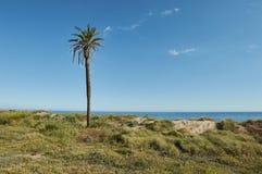 Palmtree op duinen Stock Afbeelding