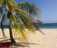 Palmtree op strand in Cuba Trinidad Royalty-vrije Stock Afbeeldingen