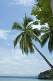 Palmtree over ocean Royalty Free Stock Image