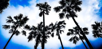 Palmtree royalty free stock photo