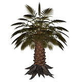 Palmtree, palm tree - 3D render Stock Photo
