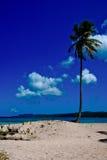 Palmtree perdido Fotos de Stock Royalty Free
