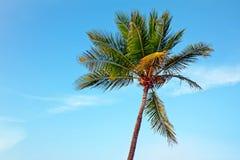 Palmtree przeciw niebieskiemu niebu Zdjęcia Royalty Free