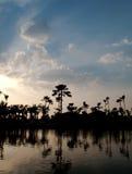 Palmtree reflecting on the water. Nice sky reflecting palm tree on the water thailand Stock Photos