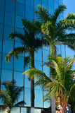 Palmtree Reflexion lizenzfreie stockbilder