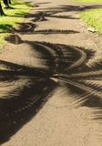 Palmtree shadows on the path. In a park of mauritius island stock photography