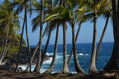 Palmtree Shoreline in Hawaii. Tropical shoreline with Palm trees, beach and lava with the blue ocean Royalty Free Stock Photography