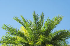 Palmtree sidor royaltyfria bilder
