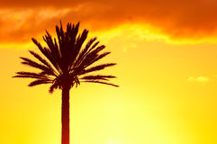 Palmtree silhouette on the sunset sky background Royalty Free Stock Photo