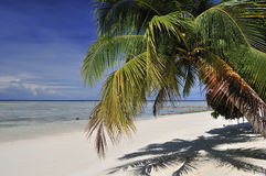 Palmtree on Sipadan beach Royalty Free Stock Photo