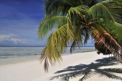 Palmtree on Sipadan beach. Tropical scene with a palm tree on the white exotic beach of Sipadan Island Royalty Free Stock Photo