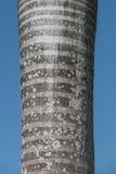 Palmtree skäll arkivfoton