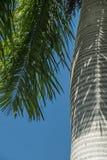 Palmtree skäll royaltyfria foton