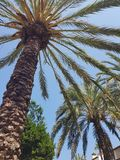 Palmtree skies. Vacation blue heaven summer royalty free stock images