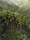 Palmtree skog i Sri Lanka Royaltyfri Bild