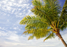 Palmtree and sky Stock Photo