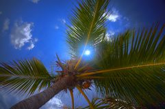 Palmtree and sky with a clouds. Nice palmtree with cocnut and aglare blue sky with a clouds Royalty Free Stock Photography