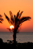 Palmtree sunset Stock Images