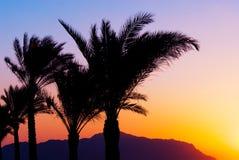 Palmtree sunset Stock Image