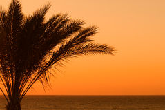 Palmtree sunset Royalty Free Stock Photo