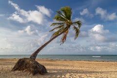 Palmtree sur une belle plage dans les Caraïbe Photo stock