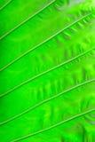 Palmtree texture Stock Image