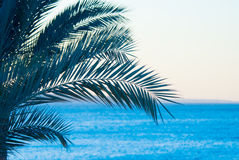 Palmtree tropical Photo stock