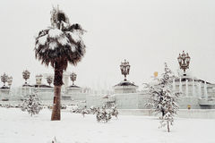 Palmtree under the snow. Palmtree, lampposts and fountain under the snow. Ashkhabad. Turkmenistan stock photography