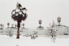 Palmtree under snowen arkivbild