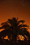 Palmtree under stars Royalty Free Stock Images