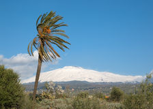 Palmtree And Volcano Etna. Landscape for a palmtree and volcano Etna covered by snow stock photo