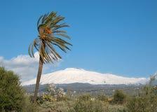Palmtree And Volcano Etna Stock Photo