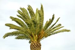 Palmtree in the wind Stock Photos
